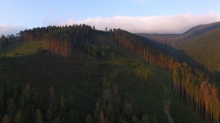 amazonka : Deforestation. Aerial drone view of forest destroyed in Ukraine. 4K Wideo