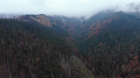 boomtoppen : Aerial Drone Footage View: Flight over autumn mountain with forests and fields. Carpathian Mountains, Ukraine, Europe. Majestic landscape. Beauty world. 4K Stockvideo