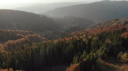 Epic aerial view of mixed spruce and deciduous green and orange autumn forest. Epic Glory Inspiration Hiking And Tourism Concept. 4K