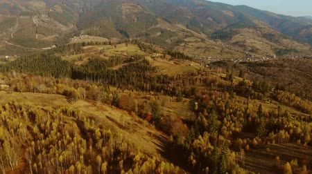golden falls : Aerial Drone View: Flight over pine tree forest and country road in sunset soft light. Mountain range in background. Nature, travel, holidays. Carpathians, Ukraine, Europe. Camera go up. 4K motion Stock Footage