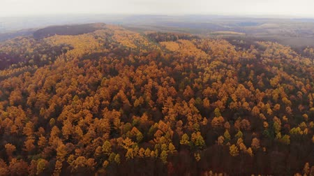 Amazing aerial birds eye view forest, trees at fall season. Red orange yellow foliage, autumn colors. Drone real time footage. Flying about deciduous red and green leaves trees. Stockvideo
