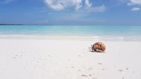 kumlu : Maldives beautiful beach background white sandy tropical paradise island with blue sky sea water ocean 4k hermit crab