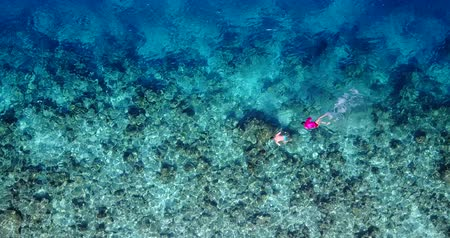 z lotu ptaka : Aerial flying drone view of Maldives white sandy beach young people snorkeling swimming underwater on sunny tropical paradise island with aqua blue sky sea water ocean 4k