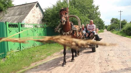 lovas : Village people ride on horse cart, summer day, poor villagers