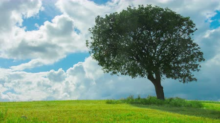 экономить : Time-lapse of green tree growing alone in field, clouds flying in blue sky