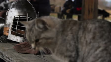 munitions : Hungry cat looking for food on wooden table at military camp Stock Footage