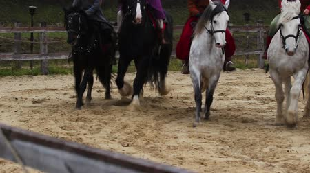 four legs : Medieval festival, demonstration of pedigreed horses with riders on their backs