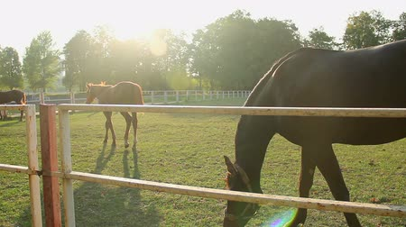 jardim zoológico : Nice colt and yearling horses grazing on sunlit eco pasture at the stud farm