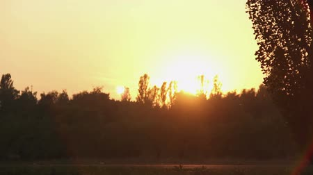 penetrating : Rays of fantastic golden sunset penetrating tops of trees in beautiful park Stock Footage