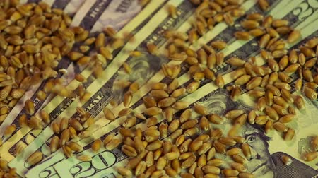 lucrative : Close-up of wheat grain dropping on US dollar bills, agricultural business Stock Footage