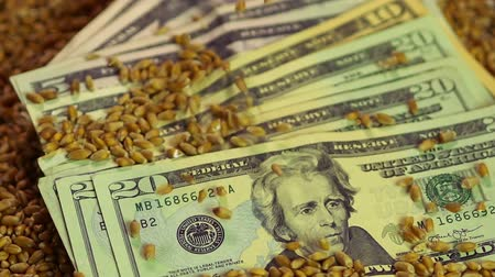 lucrative : Wheat seeds dropping on paper money, lucrative business, food grain export