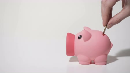 svině : Human hand putting penny coin in piggy bank, saving money on personal account