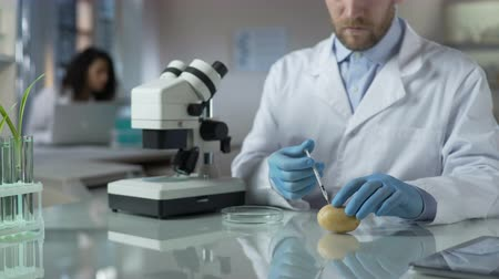 geny : Agronomists in laboratory breeding new varieties of potatoes, doing experiments