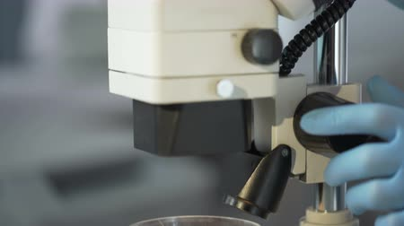 germinated : Lab worker observing in microscope effect of growth hormone on germinated crops