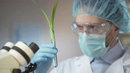 germinated : Scientist looking at germ, made scientific breakthrough in biology, innovation