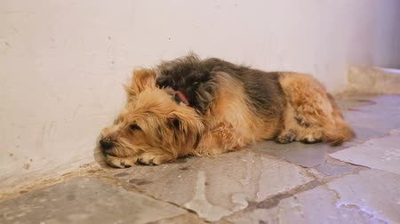 precisão : Unhappy dog sleeping in city street alone, devoted animal waiting for master Stock Footage
