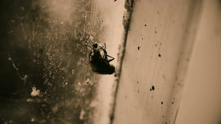 fobi : Dirty insect sitting on window at abandoned building, poverty and helplessness