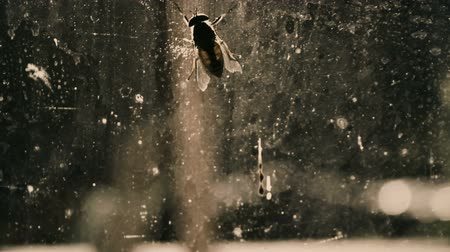 insects isolated : Fly on dirty window, insanitary place with infections, microbes and diseases