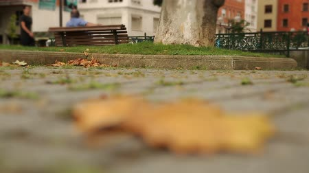 refocus : Dry maple leaf lying on paved sidewalk, autumn in big city, lonely ageing, time