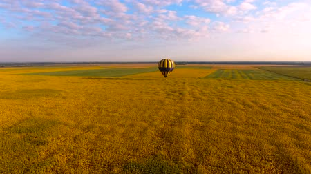amarelado : Hot air balloon flying low over yellowish field against blue sky, aerial view