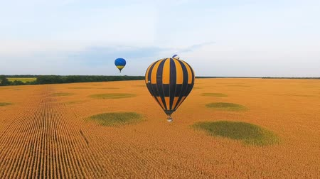 umutlu : Couple of hot air balloons floating over golden fields, mesmerizing landscape