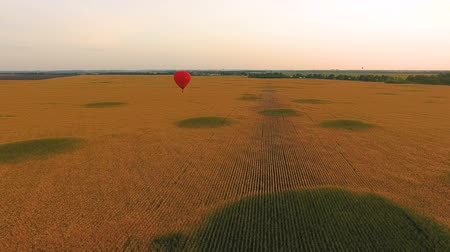 amarelado : Red hot air balloon floating over golden field, individual tour, romantic date Vídeos
