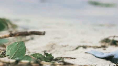 evacuated : Flies on polluted coast, garbage on dirty sandy ocean shore, abandoned beach