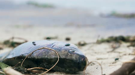 poisoned : Dead fish lying on coast, environmental disaster, tragedy in ocean, ecology