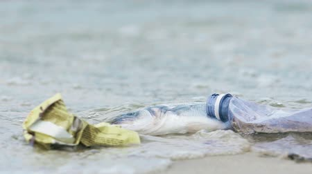 dirty beach : Disgusting rubbish, litter rotting on contaminated seashore, pollution problem