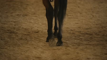 dirt : Bay horse hooves walking on sand, hippotherapy treatment, horseback riding