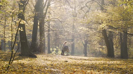 stroll : Young mother with a stroller standing in motionless autumn forest, relaxation