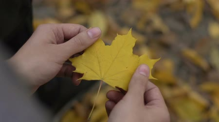 yokluk : Yellow autumn leave in man hands, break up with partner, lost hope, depression Stok Video