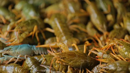 sempre viva : Live crayfish at local market, traditional seafood, buying products for cooking Vídeos