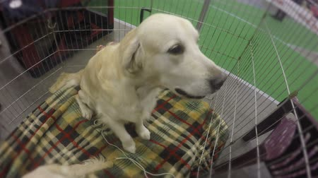 kennel : Dog happily barking and jumping in cage to welcome its master, adorable pet