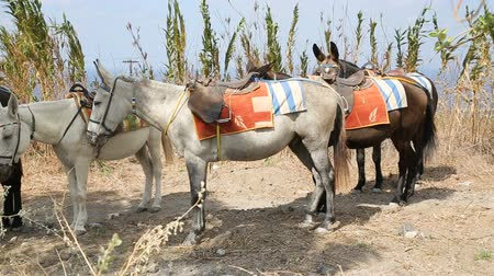 meio : Donkeys standing in line on road shoulder tied one to another, local transport