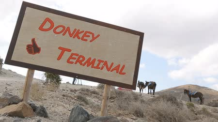 meio : Board showing direction to donkey terminal, animals tied up at parking space