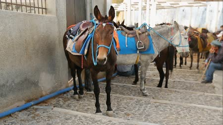 equipped : Donkeys with saddles standing in the street, men sitting on basement nearby Stock Footage
