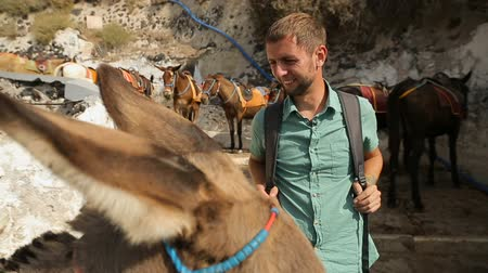 szamár : Donkeys with straddles standing on road, male petting donkey, tourist attraction