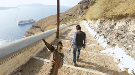 burro : Owner leading donkey down road at seacoast, entertainment for tourists, Greece