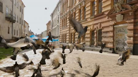 lviv : Passing woman looking at wild dove birds taking off city street on summer day