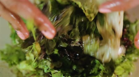 ocet : Female hands mixing lettuce leaves with vinegar, salad ingredients close up