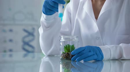 seringa : Biology researcher injecting hormonal liquid in test plant, herbal cosmetics Stock Footage