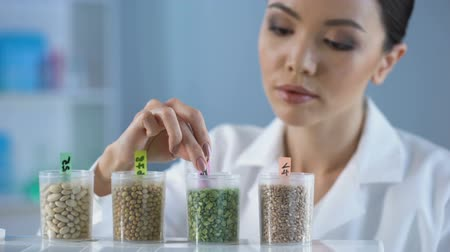 nagyító : Female scientist analyzing pea grain magnifying glass, organic food inspection