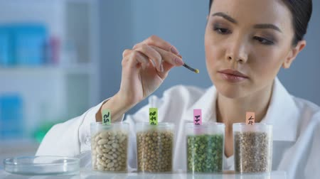 bezelye : Asian lab worker examining peas grains and making report on tablet, control Stok Video