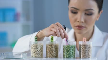 peas : Professional researcher inspecting grains, marking test bottle, farm pesticides Stock Footage