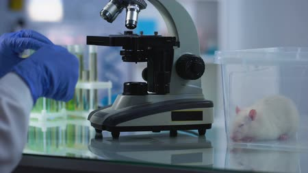 cukorbaj : Female biologist looking through microscope at lab sample, pharmacology research