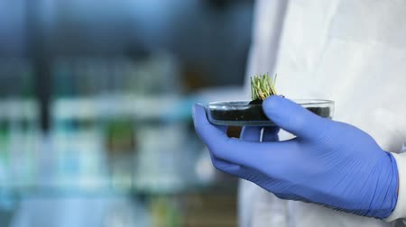 сортировать : Biologist holding new sort of crops, using tablet for recording research results
