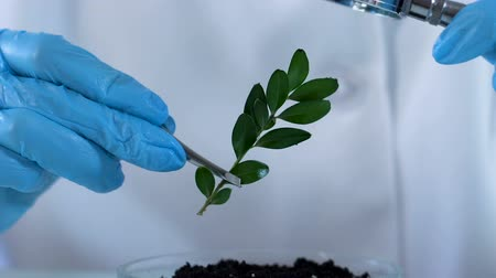 herbicides : Biology specialist studying plant from fertilized ground through magnifier Stock Footage