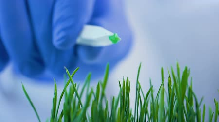 herbicides : Lab worker adding piece of steroids to germinated sprouts, cereals modification Stock Footage
