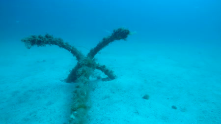 conventional : Old weed-covered anchor lying on sea bottom, shipwreck remains under water Stock Footage